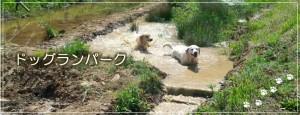 main_dogrun